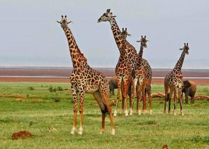 Туры в Кению, Сафари в Кении, Отдых в Кении