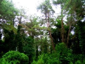 Туры в Пицунду, пасионаты и санатории Пицунды